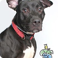 Adopt A Pet :: Sawyer - Knoxville, TN