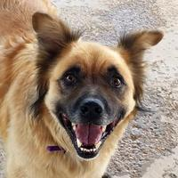 Adopt A Pet :: Eastwood - Sheridan, WY