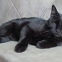 Adopt A Pet :: Sebastian - Seguin, TX