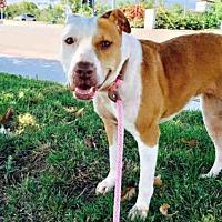 Adopt A Pet :: SRIRACHA - San Diego, CA
