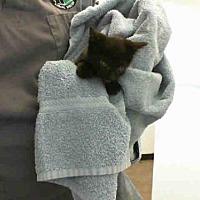 Adopt A Pet :: WAYNE - San Martin, CA