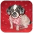 Photo 1 - Shih Tzu Dog for adoption in Staunton, Virginia - Muffy