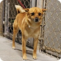 Adopt A Pet :: Swiper - Athens, GA