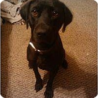 Adopt A Pet :: Lady Luck - Altmonte Springs, FL