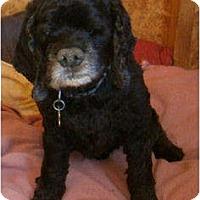 Adopt A Pet :: BUDDY & PENNY - Toluca Lake, CA