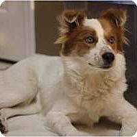 Adopt A Pet :: Eddie - Alexandria, VA