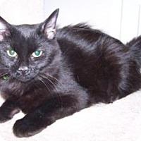 Adopt A Pet :: K-Hart7-Della - Colorado Springs, CO