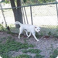 Adopt A Pet :: Alex - Geneseo, IL