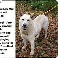 Adopt A Pet :: # 682-09 - RESCUED! - Zanesville, OH