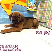 Adopt A Pet :: Phil - South Jersey, NJ