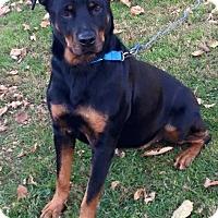 Adopt A Pet :: Chloe - Morgantown, WV