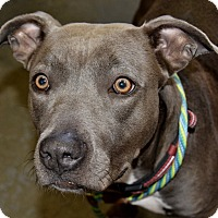 Adopt A Pet :: Diamond - Meridian, ID