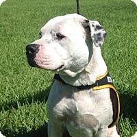 Adopt A Pet :: Axel - Pompano Beach, FL