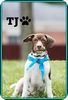 Terrier (Unknown Type, Medium)/Hound (Unknown Type) Mix Puppy for adoption in Elgin, Illinois - TJ
