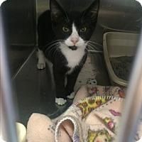 Adopt A Pet :: Ariel - Richboro, PA