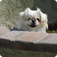 Adopt A Pet :: PEARL - SO CALIF, CA