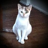 Adopt A Pet :: Kora - Fairborn, OH