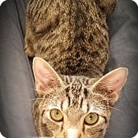 Adopt A Pet :: Natalia - Fairborn, OH