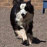 Adopt A Pet :: Champ - Highland, IL