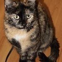 Adopt A Pet :: 3854 Leelou - SO - Council Bluffs, IA