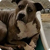 Adopt A Pet :: Mattie - Jacksonville, FL