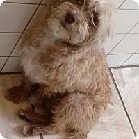 Adopt A Pet :: Juno - Thousand Oaks, CA