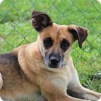 Adopt A Pet :: Petra - Elyria, OH