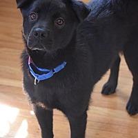 Adopt A Pet :: Juliette - Ozone Park, NY