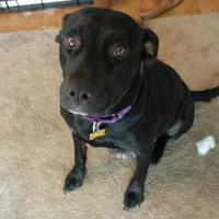 Adopt A Pet :: Nadia - DeSoto, IA