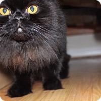 Adopt A Pet :: Suki - Novato, CA