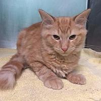 Adopt A Pet :: Stuart - Port Clinton, OH