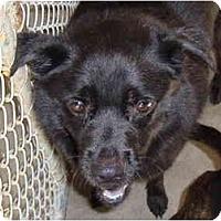 Adopt A Pet :: Shadow - Winter Haven, FL