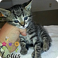 Adopt A Pet :: Lotus - Jacksboro, TN