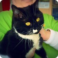 Adopt A Pet :: Talbot - Green Bay, WI