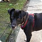 Adopt A Pet :: Lola - Mandeville, LA