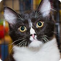 Adopt A Pet :: Gregor - Irvine, CA