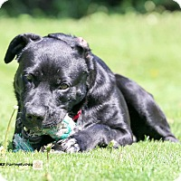 Adopt A Pet :: Mickey - Guelph, ON