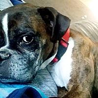 Adopt A Pet :: CHLOE - Boise, ID