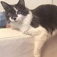 Adopt A Pet :: Padme - Oakland, CA
