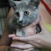 Adopt A Pet :: Megan - Robinson, IL