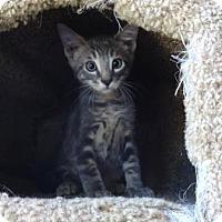 Adopt A Pet :: John Darling - Lathrop, CA