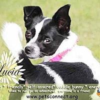Adopt A Pet :: Lucia - South Bend, IN