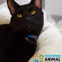Adopt A Pet :: Zachary Binx - Cheyenne, WY