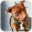 Photo 1 - Pit Bull Terrier Mix Dog for adoption in Edgewater, New Jersey - Hades