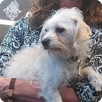 Adopt A Pet :: Claire - Seattle, WA