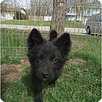 Adopt A Pet :: Shirley - Holland, MI