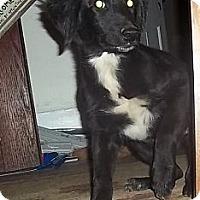 Adopt A Pet :: Janie - Allentown, PA