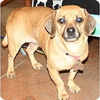 Adopt A Pet :: Lady Lewis - Nashville, TN
