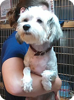 Chinese Crested Mix Dog for adoption in Seneca, South Carolina - Annie