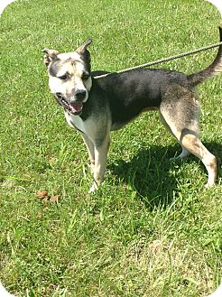Husky/Shepherd (Unknown Type) Mix Dog for adoption in Zanesville, Ohio - #181-14 RESCUED!
